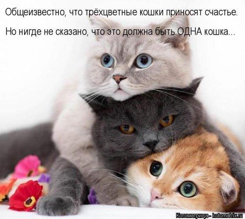Котоматрица - 3 - Страница 36 1559928796_kotomatricy-1