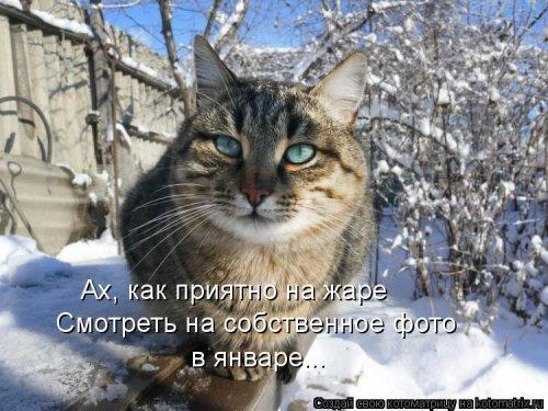 Котоматрица - 3 - Страница 36 1559928805_kotomatricy-8