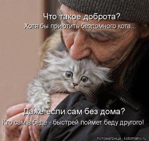 Котоматрица - 3 - Страница 36 1559928814_kotomatricy-4