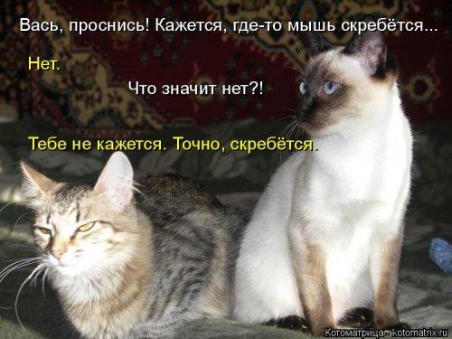 Котоматрица - 3 - Страница 36 1559928817_kotomatricy-11