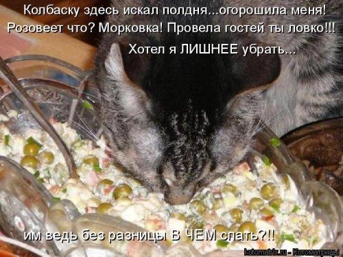 Котоматрица - 3 - Страница 36 1559928822_kotomatricy-16