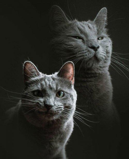 Что бывает, когда просишь посидеть со своей кошкой друга-фотографа? Правильно: он устраивает ей фотосессию! (8 фото)