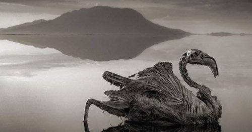 ТОП-10 Интригующих открытий, сделанных в озерах