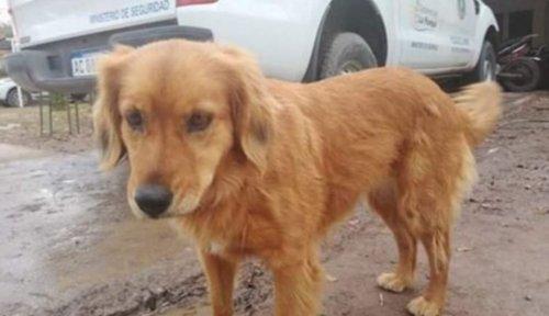 Хатико по-аргентински: собака ждёт у полицейского участка своего хозяина, которого арестовали более года назад (2 фото)