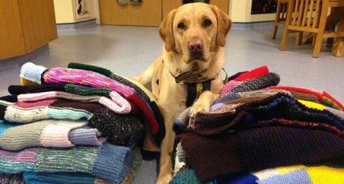 89-летняя британка вяжет для приютских собак одеяла и одежду, чтобы им было теплее и уютнее, пока они не найдут себе новый дом (8 фото)