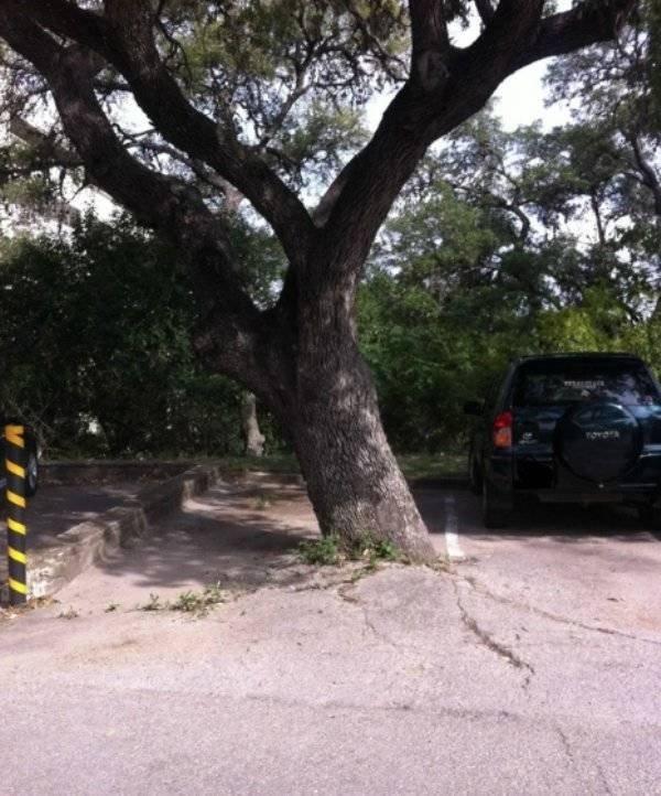 22 убедительные фотографии о воле к жизни растений и деревьев, которые