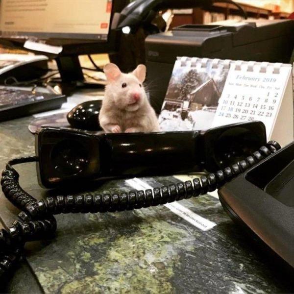 Фотоколлекция со смешными животными, которая подарит улыбку (29 фото)