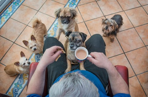 Фотографии-победители конкурса Kennel Club Dog Photographer of the Year 2019 (15 фото)