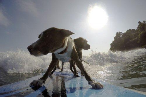 Фото с серфинга в Сиднее (25 фото)