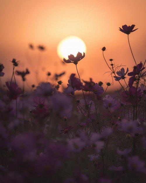 Японский фотограф показал красоту своей родины. Фото