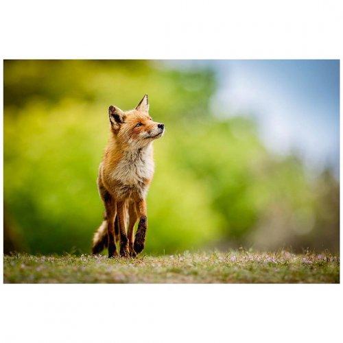 Секреты дикой природы в фотографиях Шона Уикли (14 фото)