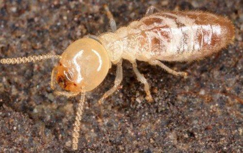 Отвратительные, но интересные факты о тараканах