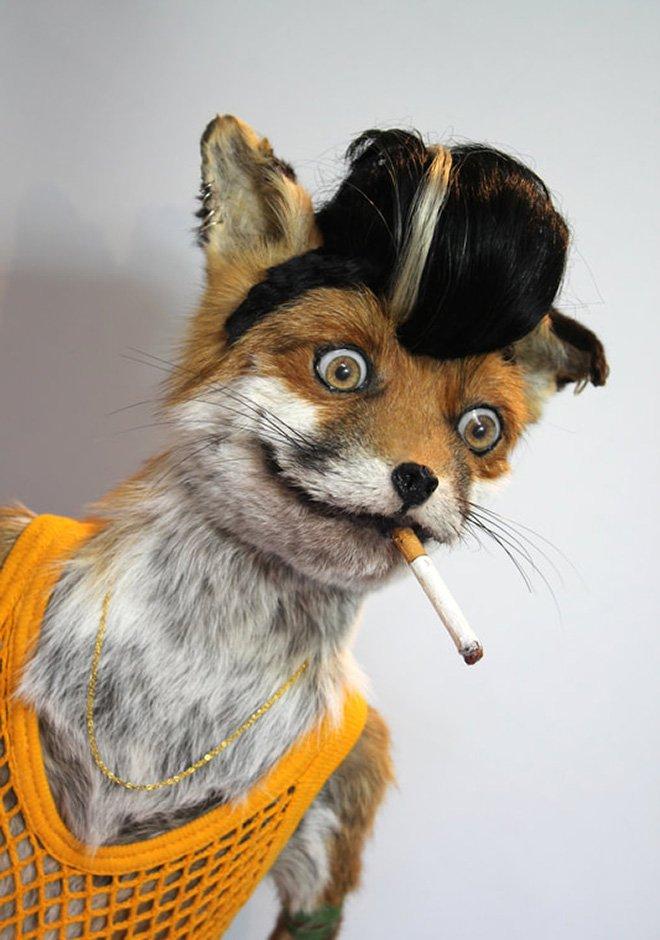 установки смешные картинки с чучелом лисы беспородная собака