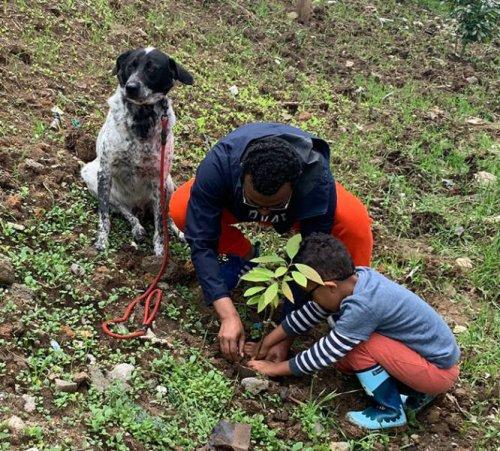 Эфиопия установила новый мировой рекорд, посадив более 350 миллионов деревьев за один день (13 фото)