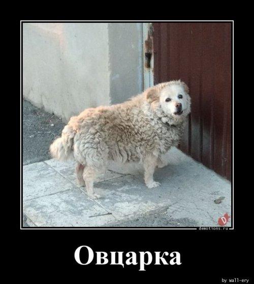 Демотиваторов сборник (15 фото)