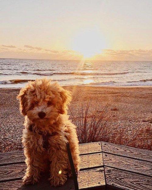 26 очаровательных щенков, которые вызовут вашу улыбку