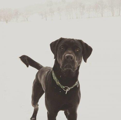 Собаки скрещенных пород (17 фото)