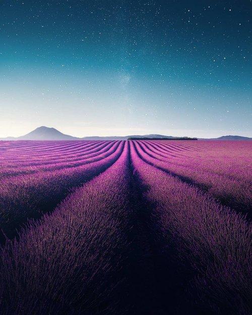 Красота лавандовых полей в фотографиях Самира Бельхамра (12 фото)