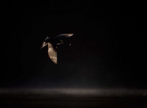 Победители фотоконкурса Bird Photographer of the Year 2019 (20 фото)