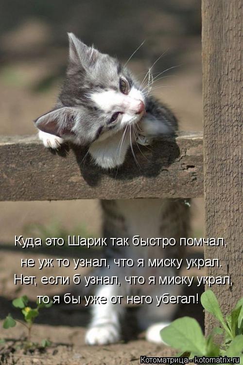 Новая котоматрица (47 фото)