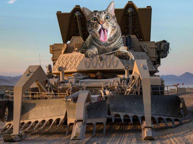 как коты захватили мир картинки пламени предназначен для