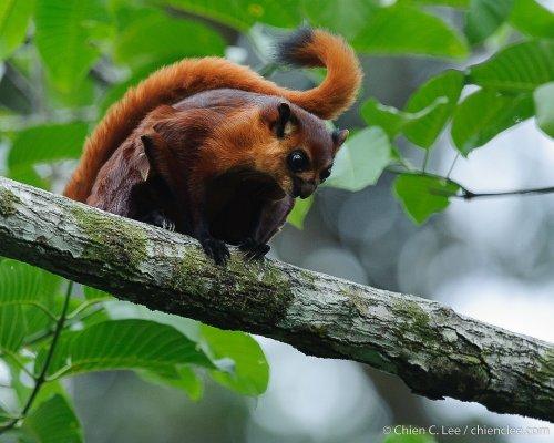 Обитатели тропических лесов Борнео в макрофотографиях Чиэня Ли (20 фото)