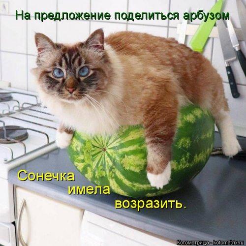 Лучшая котоматрица на Бугаге (45 фото)