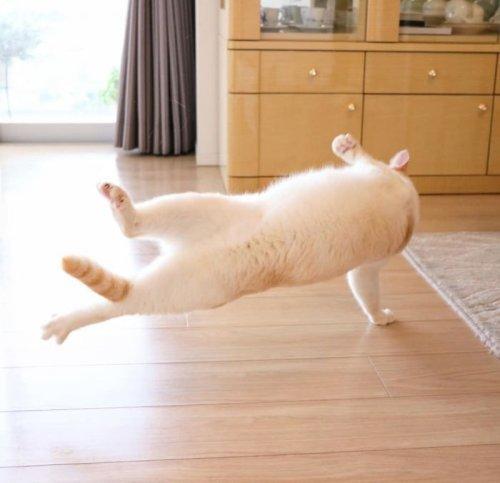 Танцующий кот Чако из Японии (25 фото)