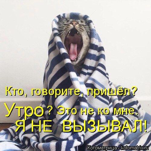 Свежая котоматрица (42 фото)