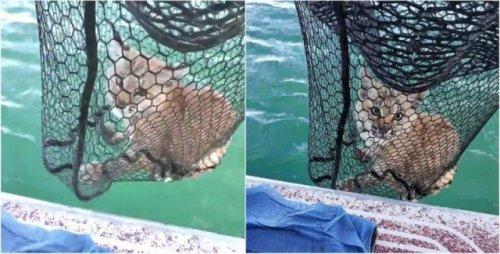 Поймали на рыбалке рысь