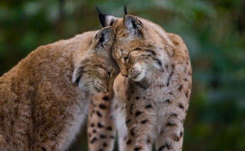Фотограф делает портреты животных, демонстрирующие их любовь друг к другу (28 фото)