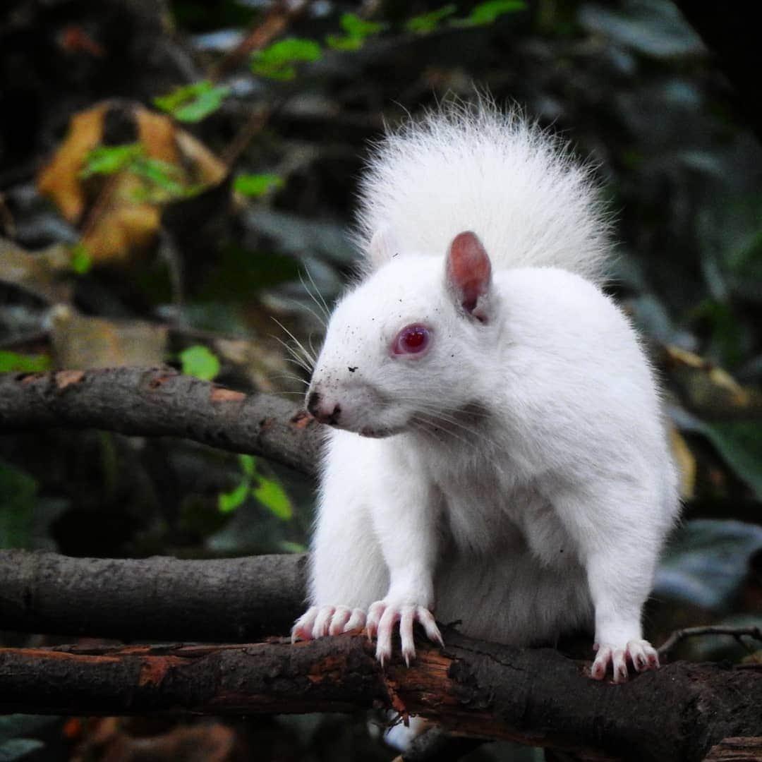 происшествии подтвердили фото животных альбиносов никого
