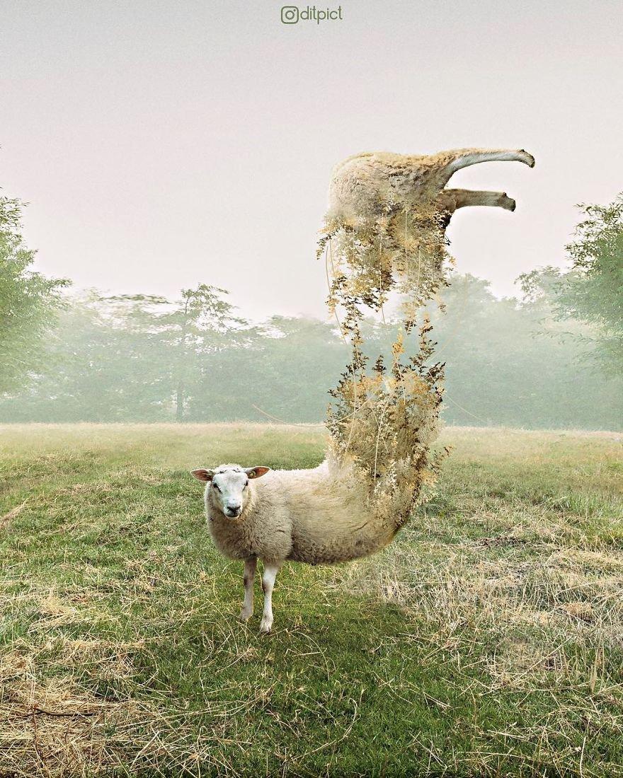 Сюрреалистические фотоманипуляции с животными от индонезийской художни