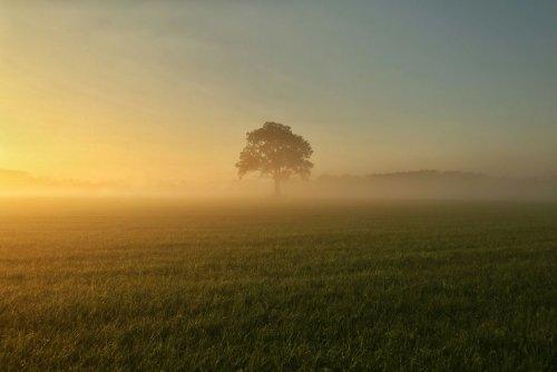 Очаровательная сельская местность Нидерландов глазами фотографа Винсента Кросе (27 фото)