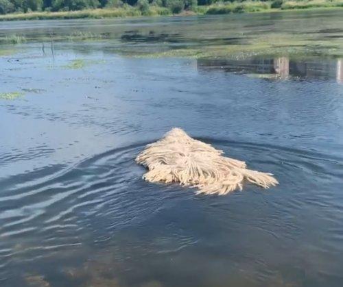 По озеру плавала швабра…