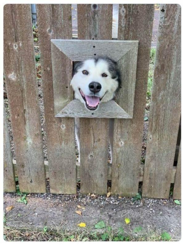 Забавные животные, которые вызовут улыбку (34 фото)