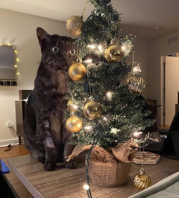 этого коты и елки прикольные фото том, что