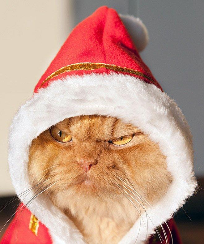фото прикол новогодний смехов