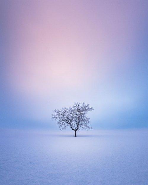 Фотограф делает идеальные снимки одиноких деревьев на фоне безмятежных финских пейзажей (8 фото)