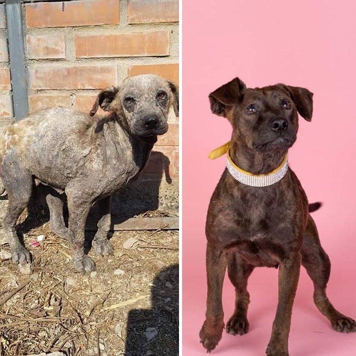 28 фотографий собак до и после того, как их спас от уличной жизни чилиец Давид Фернандес