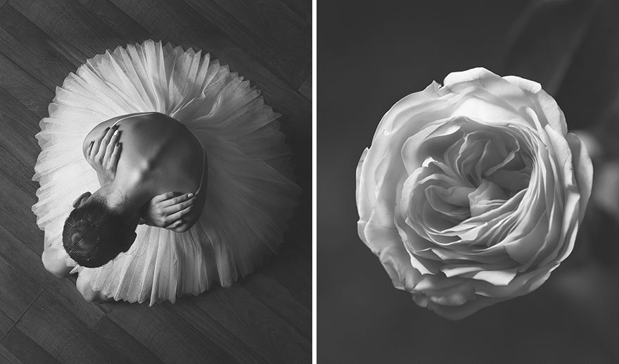 Картинки юлия и сравнение с цветком