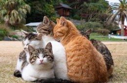 Котиков вам в ленту (10 фото)