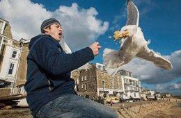 Чайки–еду-воровайки  (27 фото)