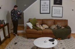 Когда собака в доме ─ настоящая помощница