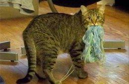 19 кошек и собак, которых поймали с поличным