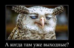 Демотиваторы для ценителей юмора и приколов (17 шт)