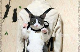 Суперреалистичный рюкзак в виде кошки (8 фото)