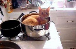 Кошки всегда будут лежать там, где хочется им. Даже если вам это не нравится (22 фото)