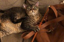 Кошка Барбара, постоянно выглядящая сердитой (24 фото)