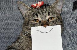 Очень смешные кошки с нарисованными ртами (21 фото)